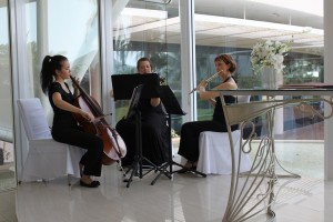 Orchid Trio at Hilton Cairns